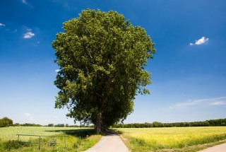 Baume Feld